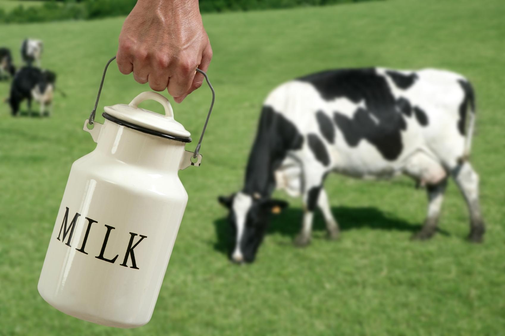 Cows_milk.jpg